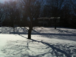 Snow Shine